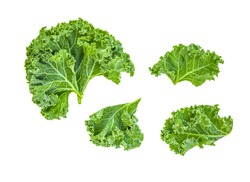 Creative layout made of kale leaves. Flat lay. Raw Kale salad isolated on white background. Food concept.