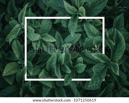 Creative layout made of leaves with paper card note. Nature concept. Green leaf texture. Leaf texture background #1071250619