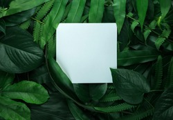 Creative layout made of leaves with white paper card note. Flat lay. Nature concept
