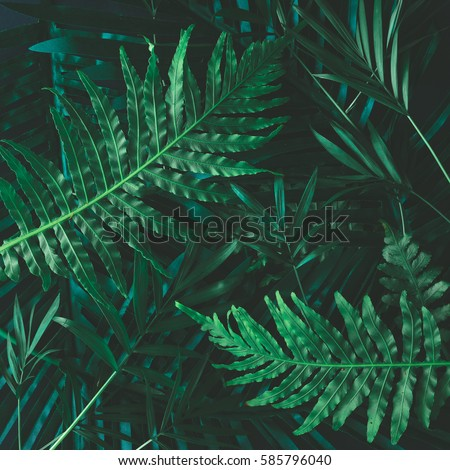 Creative layout made of tropical flowers and leaves. Flat lay. Nature concept