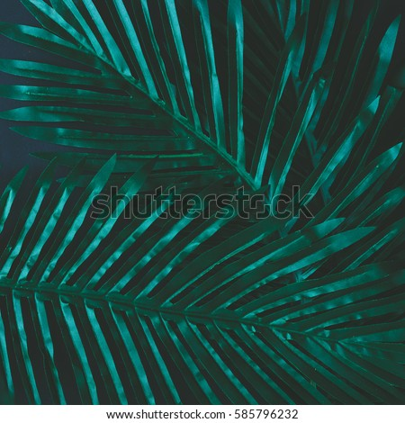 Creative layout made of tropical flowers and leaves. Flat lay. Nature concept #585796232