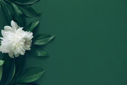 Creative layout made of white peony flowers on green background . Minimal style composition. Copy space. Flat lay. Nature concept