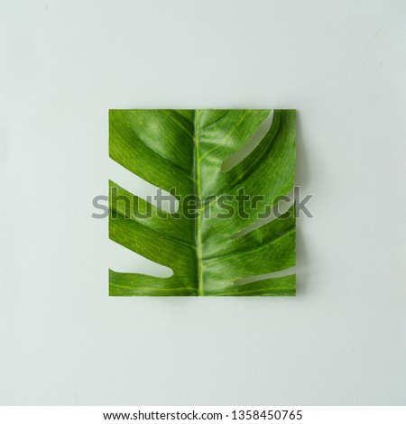 Creative layout made with cut out monstera leaf on pastel gray background. Minimal tropical nature composition with copy space.
