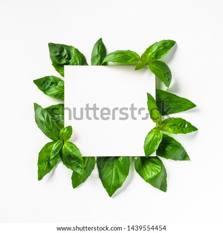 Creative layout made with green basil leaves. White paper square on heap of green basil leaves. Isolated on white. Top view or flat lay. Copy space for text. #1439554454