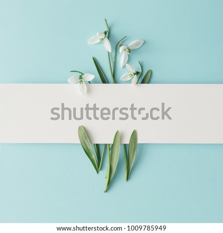Photo of Creative layout made with snowdrop flowers on bright blue  background. Flat lay. Spring minimal concept.