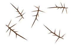 Creative layout of acacia thorns on a white background. Creative flat set of acacia thorns.
