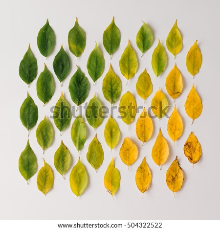 Creative layout of colorful autumn leaves. Flat lay. Season concept. #504322522