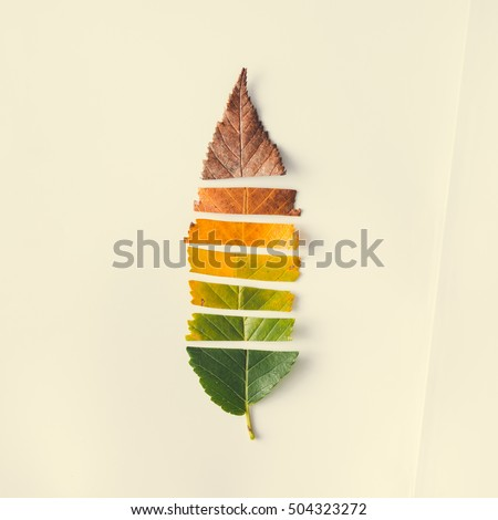 Creative layout of colorful autumn leaves. Flat lay. Season concept. #504323272