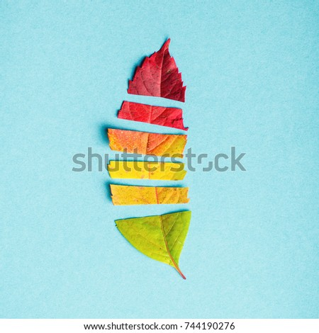 Creative layout of colorful autumn leaves, season concept, gradient of warm shades of fall with parts of leaf