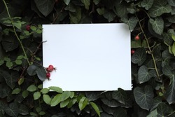 Creative layout of green leaves, various plants white empty frame, copy space.