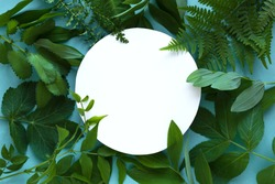 Creative layout of green leaves, various wild plants on blue and white empty round frame, copy space. Summer, spring or ecology concept.