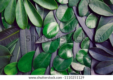 Creative layout of greenery leafs for background and texture concept. #1110251129