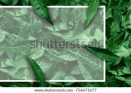 Creative layout of leaves with a paper border. Flat lay. Nature concept. #756671677
