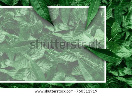 Creative layout of leaves with a paper border. Flat lay. Nature concept. #760311919