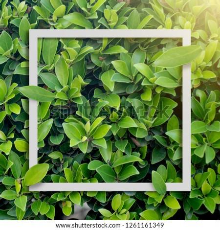 Creative layout paper card leaf white frame #1261161349