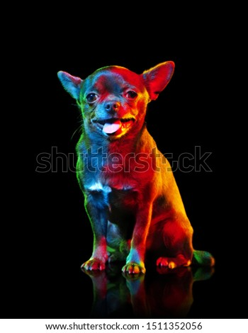 Creative lightning picture of mini chihuahua