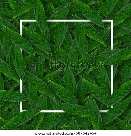 Creative minimal layout made of leaves with white paper. Flat lay. Nature concept. #687642454