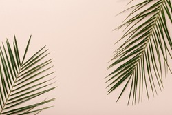Creative natural eco green background with monstera leaves on pink background, copy space