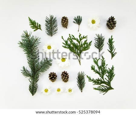 Creative natural layout of winter plants parts on white background. Thuja, fir tree, daisy flower. Botanic creative set of plants. Flat lay, top view