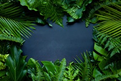 Creative nature layout made of tropical leaves. Summer concept. Fern Palm and monstera leaf on wall textures. Nature beach background layout with free text space.