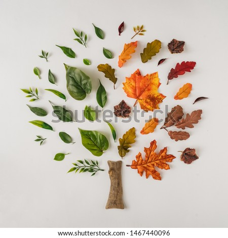 Creative season layout of colorful summer and autumn leaves and branches. Nature mockup background. Seasonal concept. Flat lay tree.