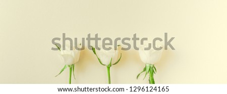 Creative top view flat lay fresh white roses composition with copy space pastel paper background minimalism style. Template feminine blog social media holiday wedding invitation card #1296124165