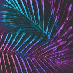 Creative tropic purple leaves layout. Supernatural concept. Flat lay. Ultra violet colors.