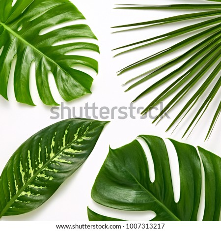 Creative Tropical Fresh Palm Leaves Set. Green Summer Design. Art Bright Layout. Nature Beach background. Minimal. Detail