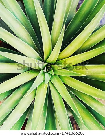 Creative tropical green leaves layout. Nature spring concept