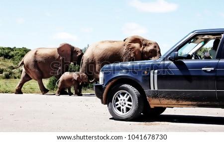 creative vintage. elephants and ...