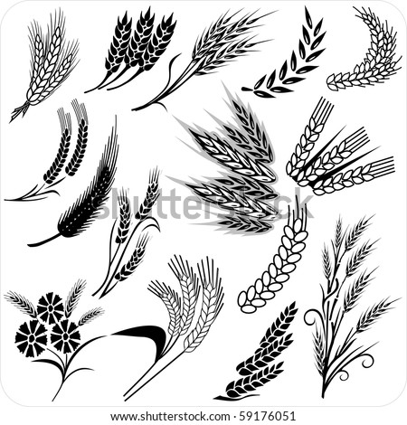 Wheat black and white clip art - Wheat black and white clipart photo -  NiceClipart.com
