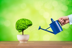 Creativity growth, better using brain function and memory improvement concept. Creativity growth represented by tree looks like the human brain watered by businessman.
