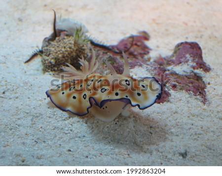 Creatures bred in Okinawa's aquarium  Stock fotó ©