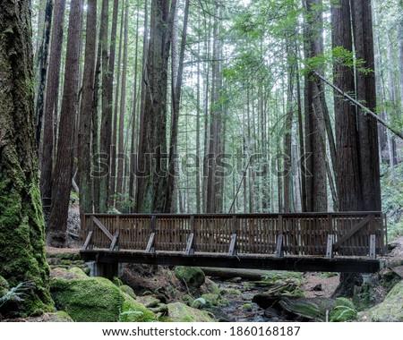 Creek crossing footbridge at Corte De Madera Creek Preserve. Redwood City, San Mateo County, California, USA. Foto stock ©
