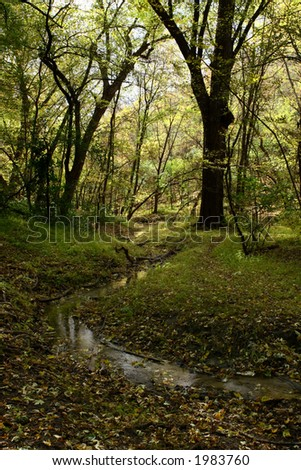 Creek flowing through a clearing in the forest in October - stock photo