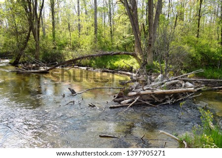 Creeks, rivers, bodies of water in the woods in Michigan woods and forest  #1397905271
