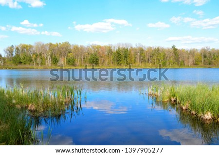 Creeks, rivers, bodies of water in the woods in Michigan woods and forest  #1397905277