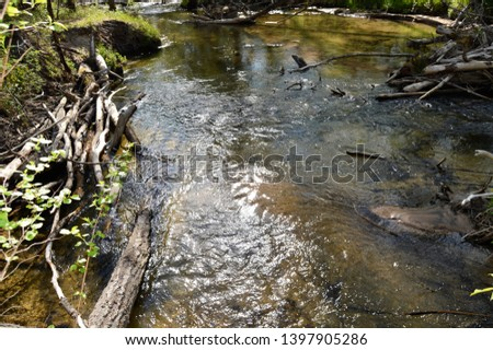 Creeks, rivers, bodies of water in the woods in Michigan woods and forest  #1397905286