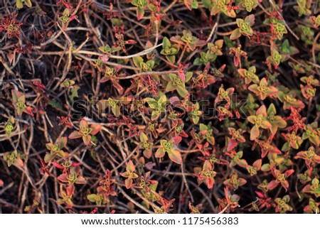 Creeping forest plant, typically growing on thin branches small flowers #1175456383
