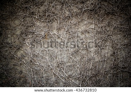 Creeping plant dried on concrete wall with dark vignette  concept : hunted house wall, Halloween, ghost house wall