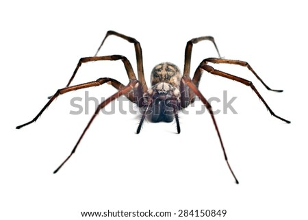 creeping spider isolated on white background #284150849
