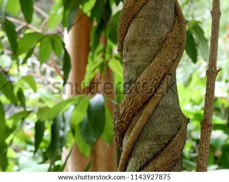 Creeping vine growing on tree trunk