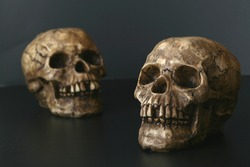 Creepy Couple:  Two skulls on a black background.  Focus on front skull.  Nice halloween image or medical/science concept shot.