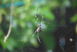 Creepy crawler building a web