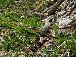 Creepy Crawly Snake Beside a Tree