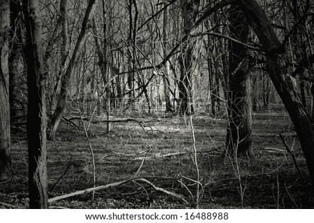 Creepy forest at night. Great for Halloween background
