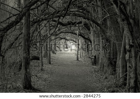 Creepy forest with trees over hanging a path