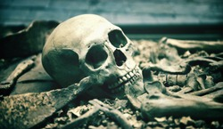 Creepy human skull in an open grave surrounded by the bones of the skeleton in a macabre background for horror, Halloween or death themed concepts