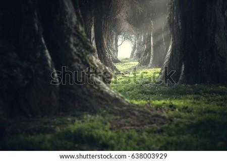 creepy mystic magic deep forest #638003929