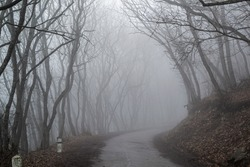 Creepy spooky natural fog. Road in the middle of forest fog and dry black tree branches at the edges